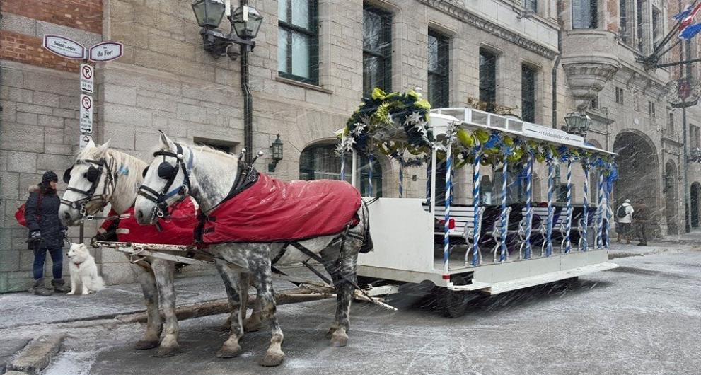 Activités à faire à Québec en attendant Noël